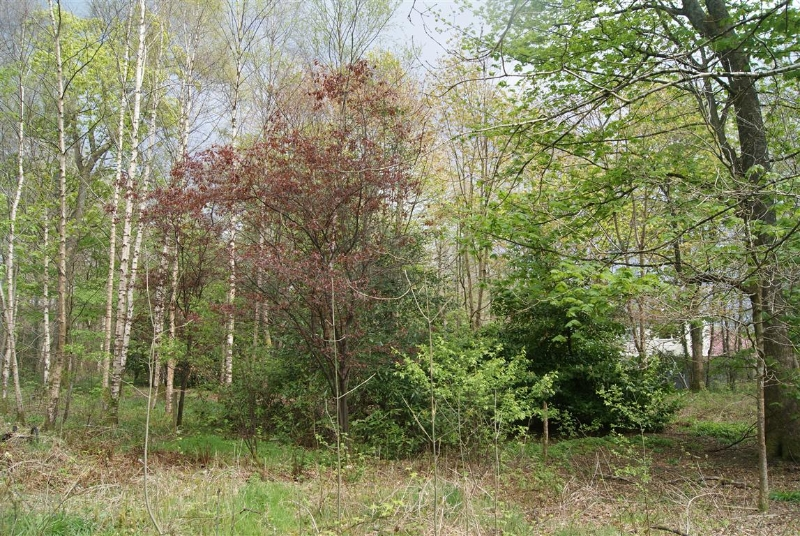 castle-woods-internal-12-medium