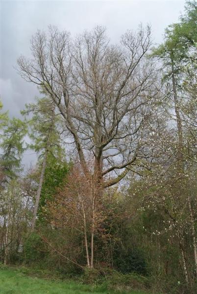 castle-woods-internal-13-medium