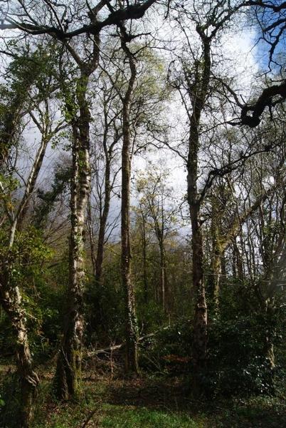castle-woods-internal-14-medium