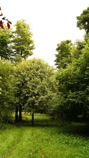 castle-woods-internal-17-medium