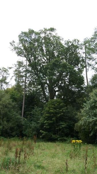 castle-woods-internal-18-medium