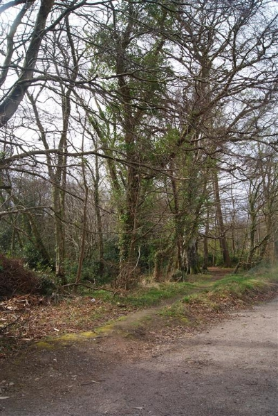 castle-woods-path-01-medium