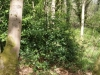 castle-woods-internal-10-medium