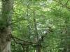 castle-woods-internal-15-medium
