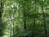 castle-woods-internal-16-medium