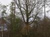 castle-woods-oak-01-medium