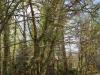 castle-woods-path-02-medium
