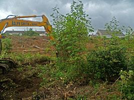 Cumberland Avenue, Helensburgh - ripping saplings