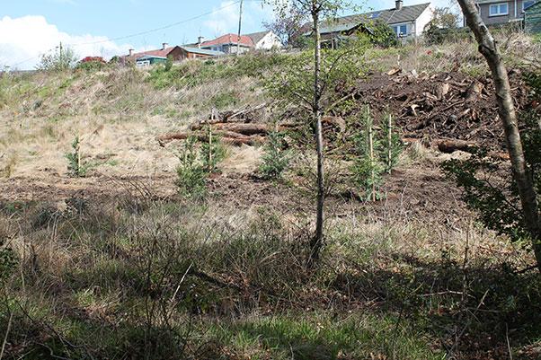 April 2014 - direct action replanting