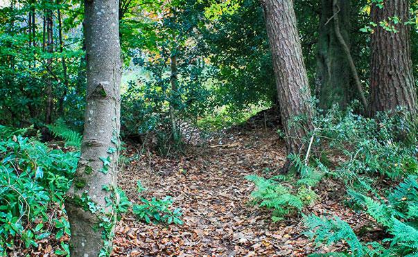 Castle Woods, Helensburgh